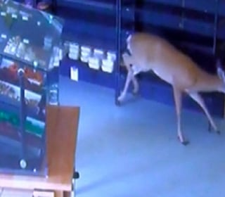 Deer Dashes Through Window Into Grocery Store