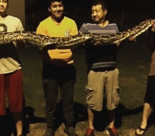 Huge Python Surprises Teen