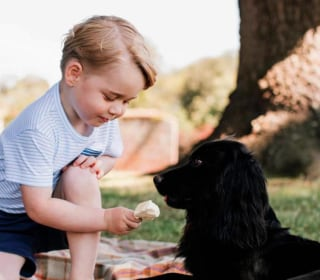 Pic of Prince George Offering Dog Ice Cream Draws Criticism
