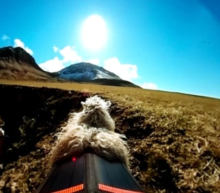Remote Islanders Replace Street View with Sheep View