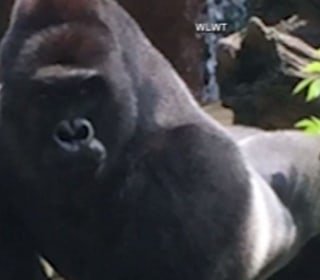College Petition for New Dorm to Be Named After Harambe