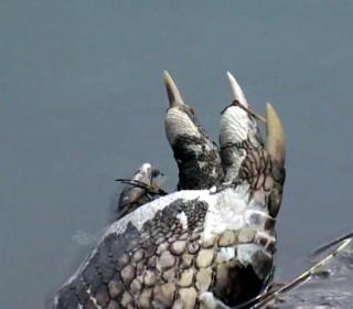 Headless Gators Shock Neighborhood