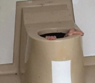 Dirty Story: Norwegian Gets Stuck Inside a Toilet