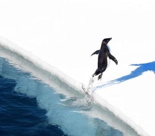 World's Largest Marine Reserve Created in Antarctica