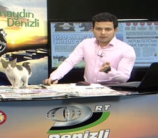 Stray Cat Wanders Into Live TV News Studio