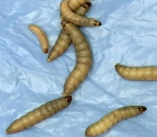 Plastic-Eating Worms Could Help Clean Up the Earth