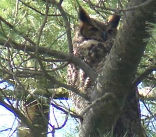 Owls Halt College Dorm Construction