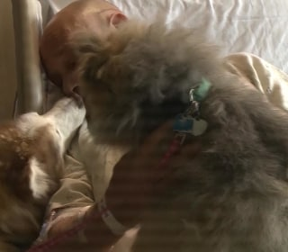 Man Reunited With Dogs He Lost in Wisconsin Tornado