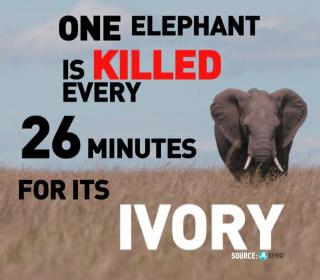 Women Saving Elephants