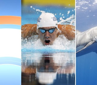 Michael Phelps vs. Great White: Who Will Win Race?