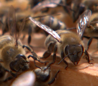 Science, Art and Nature Combine to Celebrate the Beehive