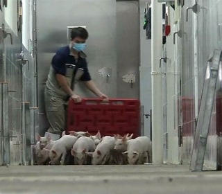 High-rise 'hotels' for hogs highlight China's new approach to farming