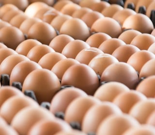Recent salmonella outbreak: How to protect yourself