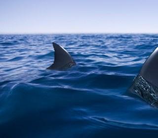 'The Meg': Is the terrifying prehistoric shark from Jason Statham's new movie real?
