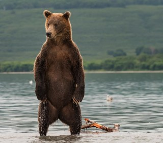 'Bears have more rights than us': Hunters struggle with grizzly coexistence
