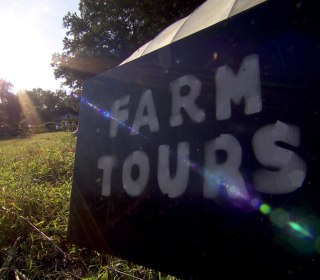 Shop Local: How Urban Farming is Complimenting Big Cities