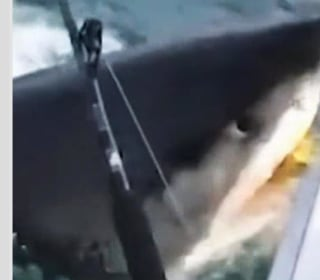 WATCH: Great white shark swims up to boat, gives fishermen a 'Jaws' moment