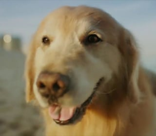 Sweet story behind Super Bowl ad about dog's cancer journey