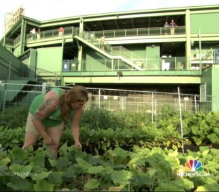 Fenway Farms: Boston Red Sox Go Green With Rooftop Garden