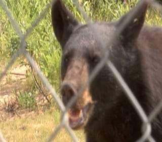 Bears Arrive At New Home