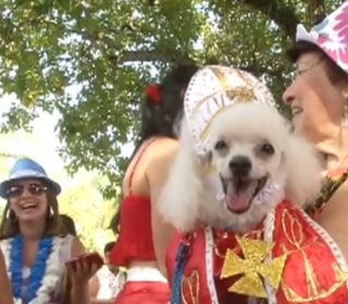 Fancy Dress Pooches Party with Their Owners at Rio Carnival