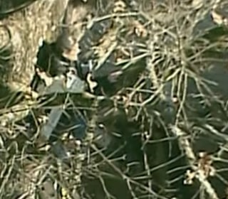 Woman Climbs Tree to Prevent it From Being Cut Down