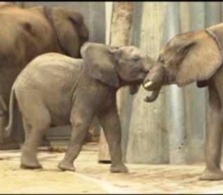 Animals Celebrate Valentine's Day at Austrian Zoo