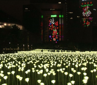 Hong Kong Ready for Valentine's Day with 25,000 LED Lit Roses
