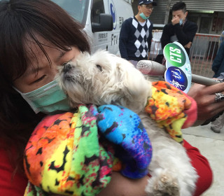 Pet Dog Rescued From Wreckage of Taiwanese Quake