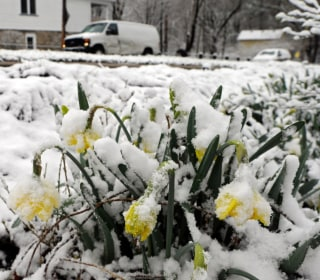 Mid-April Freeze to Chill Millions as Far South as Louisiana