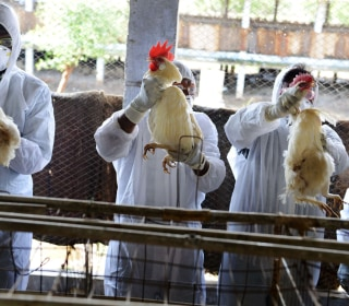 UN: Growing Threat From Animal-to-Man Diseases