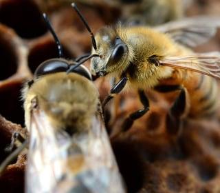 Half a million bees die in Iowa vandalism, two boys charged