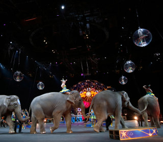 Mexico Bans Wild Animals in Circuses