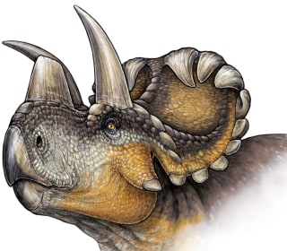 Wendiceratops: Horned Dinosaur Fossil Adds Hooks to Evolutionary Tale