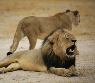 Cecil the Lion's Killer, Dr. Walter Palmer, Contacts Authorities