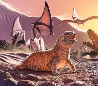 Ancient Iguana 'Missing Link' Discovered in Brazil