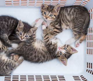 Cats Are Not Dependent on Humans, Study Shows
