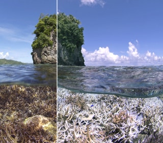 Coral Reefs Around the World Threatened by Bleaching, NOAA Says