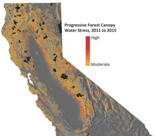 California Drought Puts Tens of Millions of Big Trees at Risk: Study