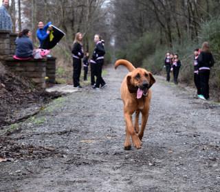 'Lazy' Dog Crashes Half Marathon, Finishes Seventh