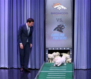 Watch 'Tonight Show' Puppies Predict Super Bowl Winner