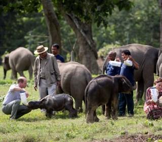 Will and Kate Feed Rhinos, Elephants on Indian Safari