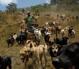 Pooch Paradise: Stray Dogs Roam Free in Hills of Costa Rica