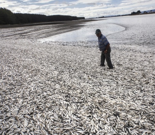 Chile's 'Worst Ever' Toxic Red Tide is Killing the Fishing Industry