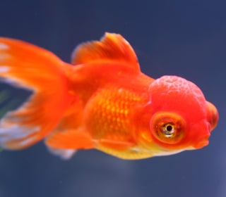 Fish Can Recognize Your Face. Really.
