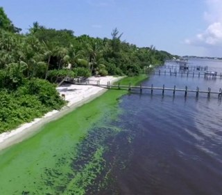Why Florida's Waterways Are Fouled With Smelly Green Gunk
