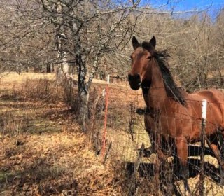 Family Wonders if 'Execution Style' Horse Killing Was Hate Crime