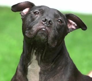 Pit Bull Rescued From Michael Vick's Dog-Fighting Ring Gets Best Day Ever