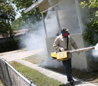 New Zika Case Found in Florida's St. Petersburg