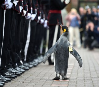 Today in Pictures: A Royal Penguin Inspects Troops and More